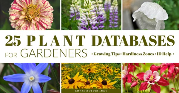 Flowering plants from plant database.