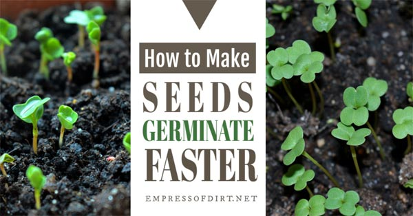 Tips for speeding up seed germination.