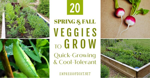 20 Vegetables to grow in spring and fall.