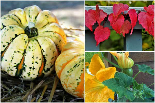 Essential Fall Gardening Checklist | Free Printable