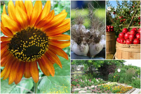 Fall Garden Guide | Sow, Grow, Create