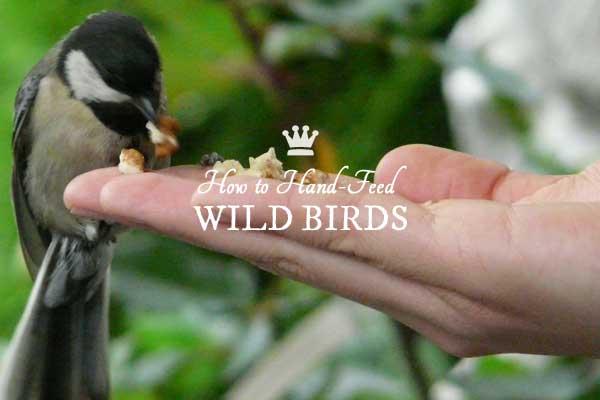 How to Hand-feed Wild Birds