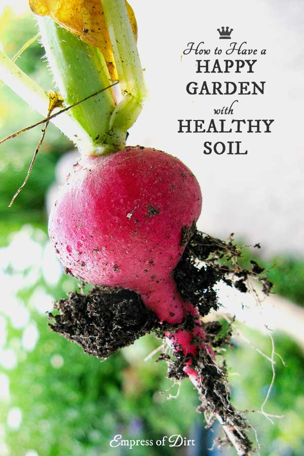 Healthy soil is essential for a healthy, happy garden. We use common words like soil, compost, organic, and humus to mean different things, so I prepared this visual guide to keep it simple for new gardeners.