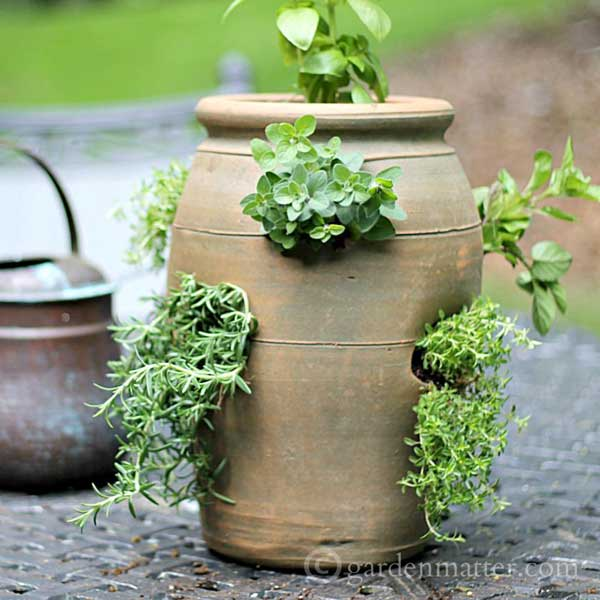 Strawberry pot planted with herbs by Garden Matter