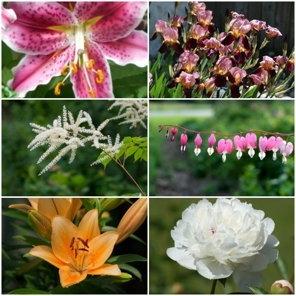 Late summer and early fall is the time to plant, divide, and transplant many different perennials, shrubs, and trees including spring flowering perennials.