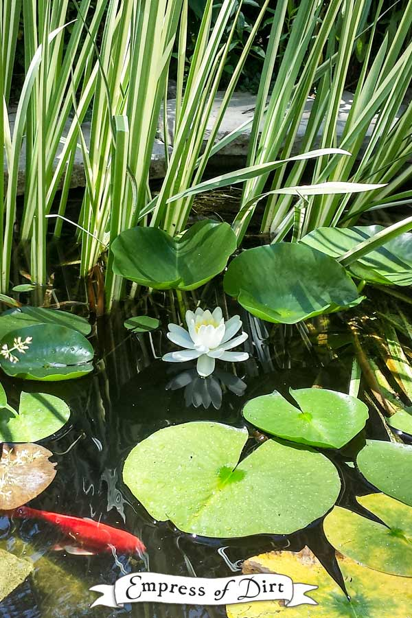 Helpful advice for starting your first garden pond.