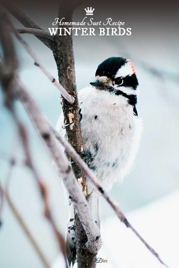 homemade-winter-suet-for-birds-c1b