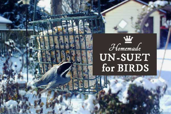 This homemade recipe is for wild birds in the winter when food is scarce. It's called un-suet because it does not contain lard like traditional suets do. It's simple to make and well-loved by the birds.