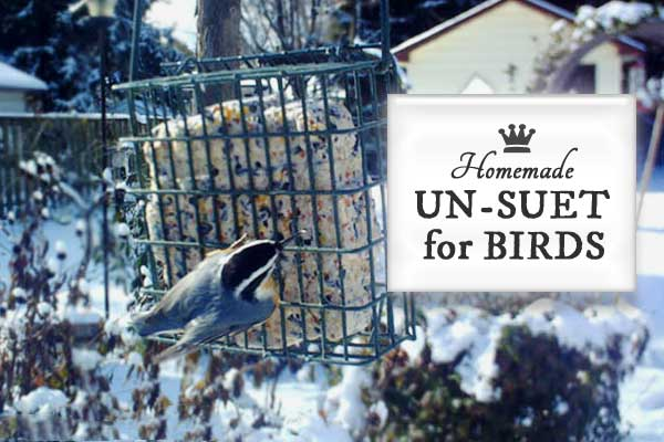 Homemade Suet for Winter Birds