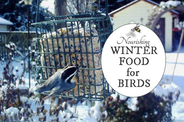 Make un-suet suet for winter birds - free recipe