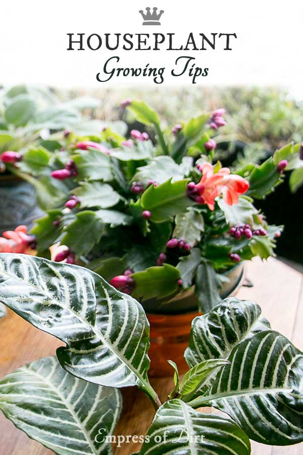 Houseplants make a home healthier. Grab these tips for successful watering, propagation, and care for African violets, orchids, succulents, growing salads greens indoors, and more.
