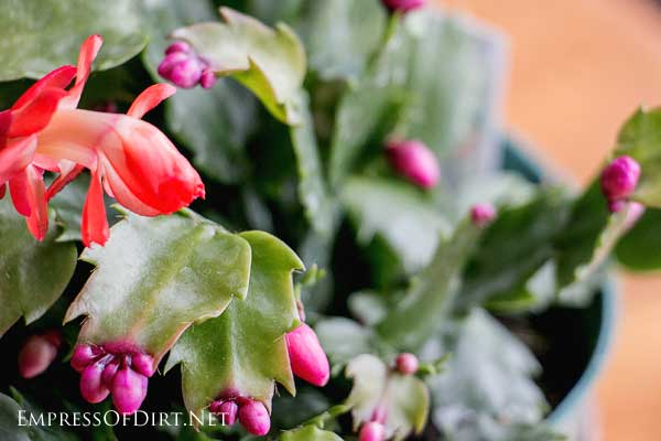 How often should you water your houseplants? This guide shows how to develop a reliable system based on the plants in your home.
