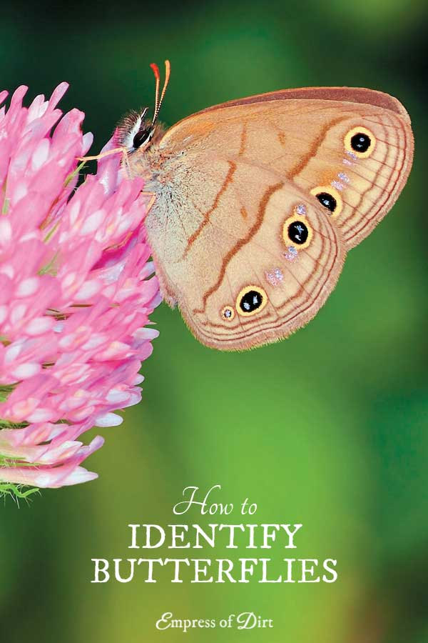 Helpful Tips for Identifying Butterflies in Your Garden