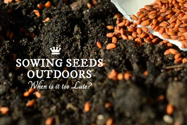 When is it too late to plant seeds outdoors?