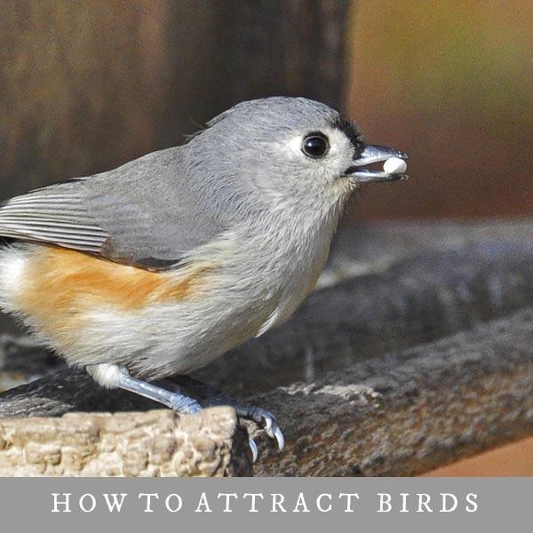 Small bird eating at birdfeeder