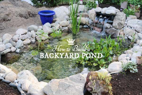 Blog empress of dirt for Building a coy pond