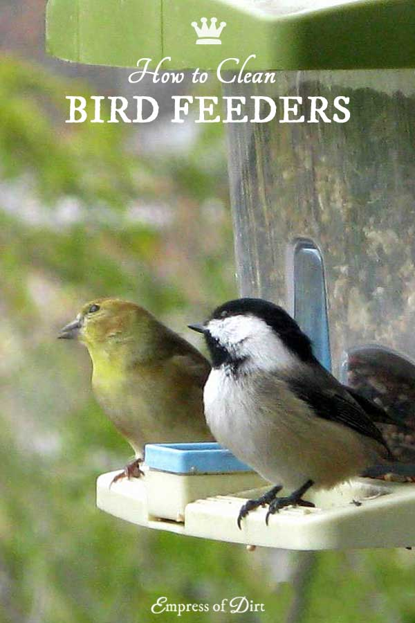Clean your bird feeders on a regular basis to avoid the spread of disease amongst wild birds.