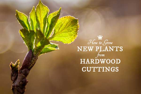 How to Grow Shrubs + Vines from Hardwood Cuttings | Free Printable