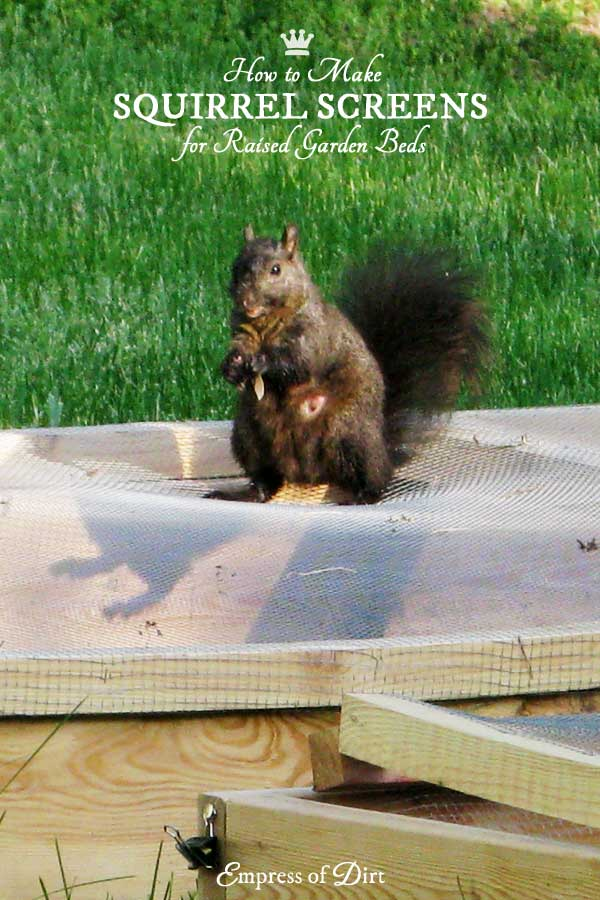 how-to-make-squirrel-screens-c1bb