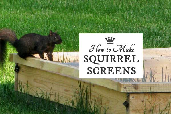 How to make squirrel screens for raised garden beds - How to keep squirrels from digging in garden ...