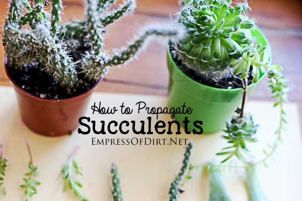 How to grow succulents from the ones you already have. See several different propagation methods for the home gardener.