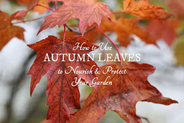 The Secret Truth About Autumn Tree Leaves