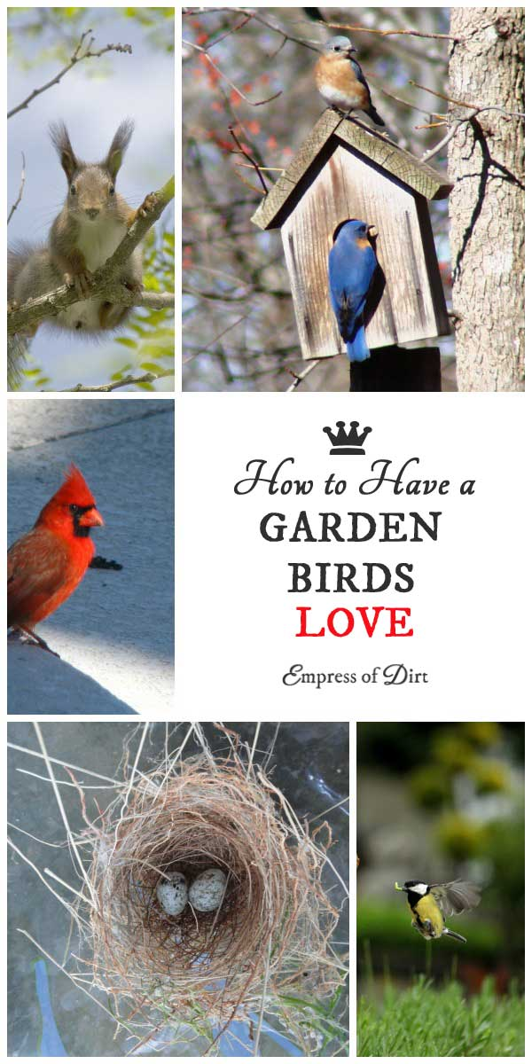 How to Have a Garden Birds Love