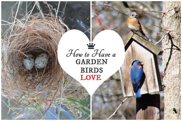 You'll have a garden birds will love if you: Provide a good habitat with trees and shrubs and minimize predator stress. Grow organically. Distinguish between garden art birdhouses and nesting boxes. Use good quality bird seed and feeders. And keep water sources safe and clean.