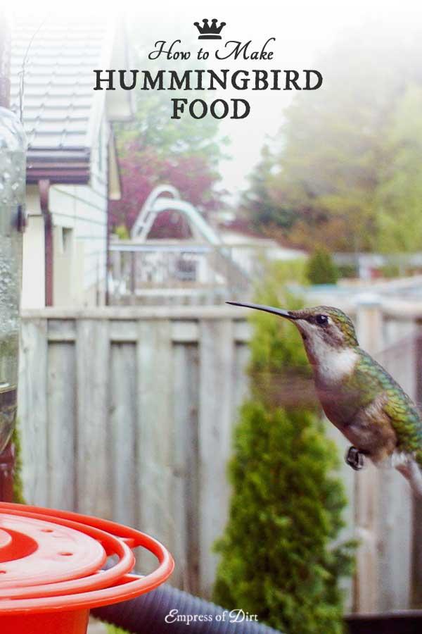 how to make hummingbird food u0026 choose a feeder - Homemade Hummingbird Food