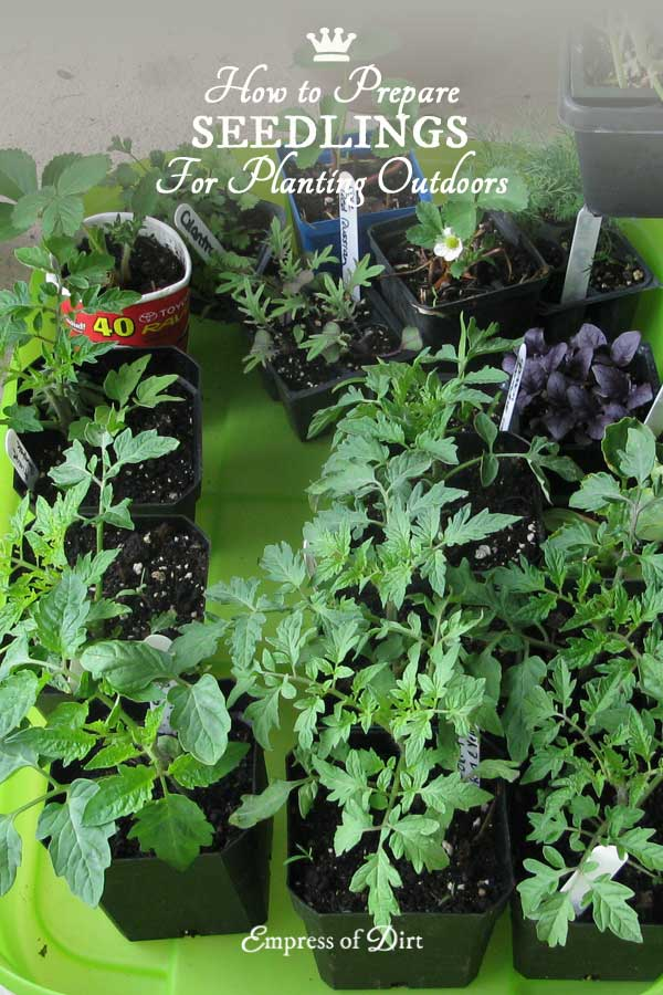 How to Harden Off Seedlings for Planting Outdoors