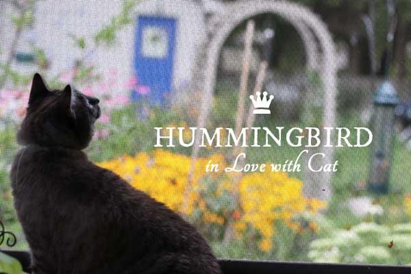 Hummingbird falls in love with cat
