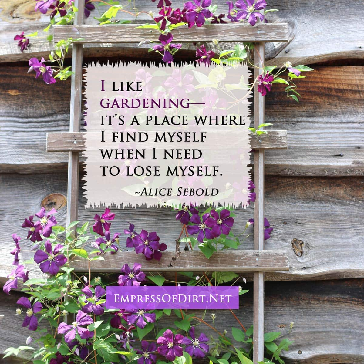 """Quote saying """"I live gardening. It's a place where I can find myself when I need to lose myself."""" by Alice Sebold."""