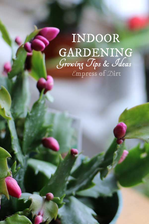 indoor-gardening-tips-ideas-c1