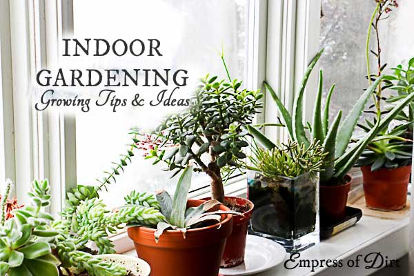 Tips for growing food indoors, indoor seed starting, and houseplant care