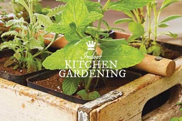 How To Get Started With Indoor Food Growing