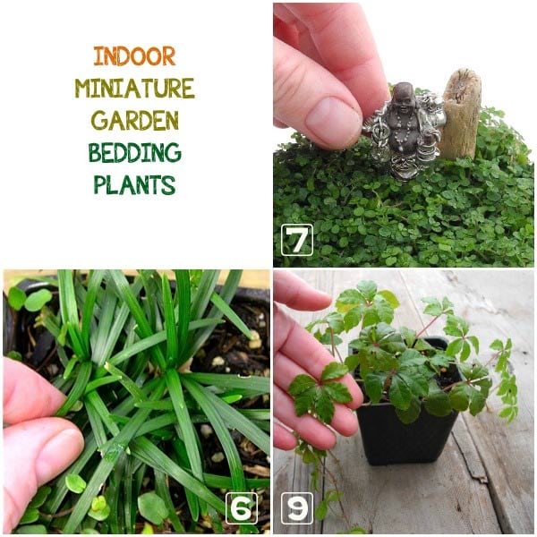 Learn how to choose the best plants for your indoor miniature garden.