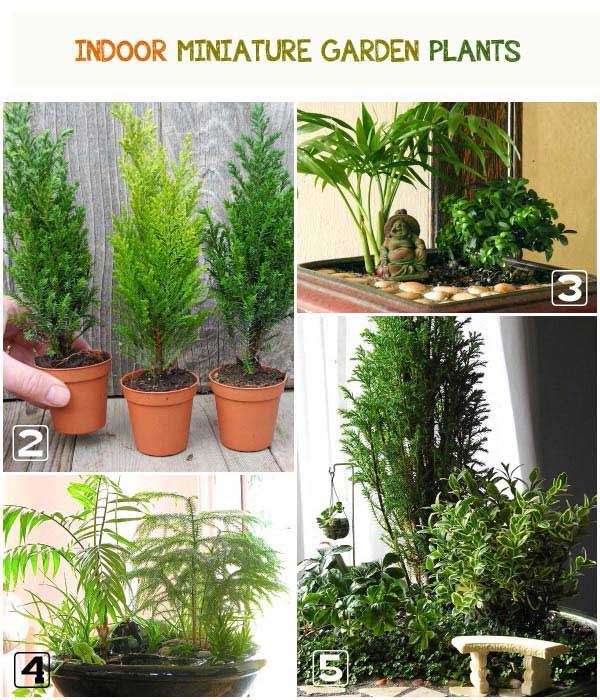 Examples of indoor miniature garden plants.