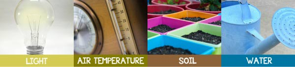 Find out what light, air temperature, soil, and water requirements plants for miniature gardens prefer.