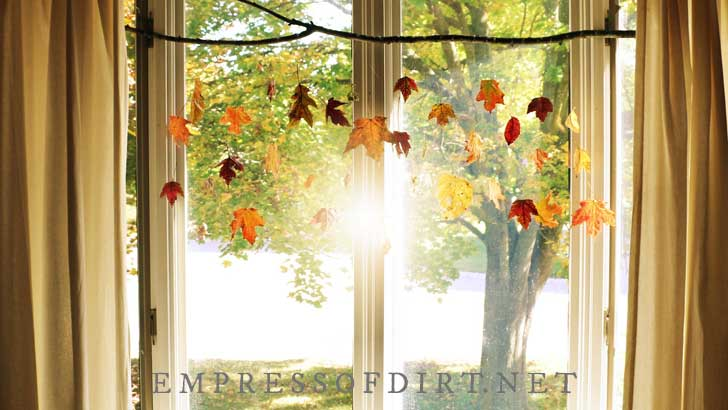 Leaves dipped in beeswax hanging in front of sunny window.