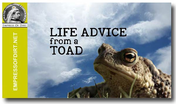 Life Advice from a Toad