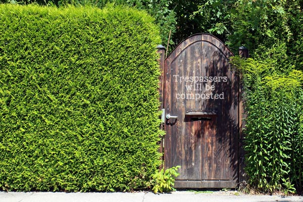 Trespassers will be composted! A thick cedar hedge is an excellent way to make a backyard garden private.