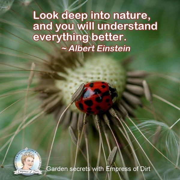 Look deep into nature, and you will understand everything better. ~Albert Einstein