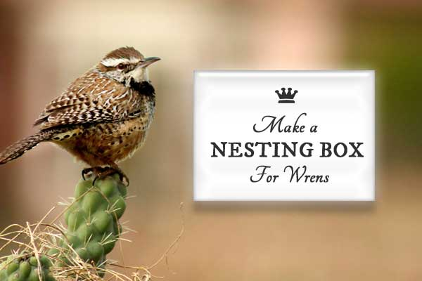 Free building plans for making a wren nesting box