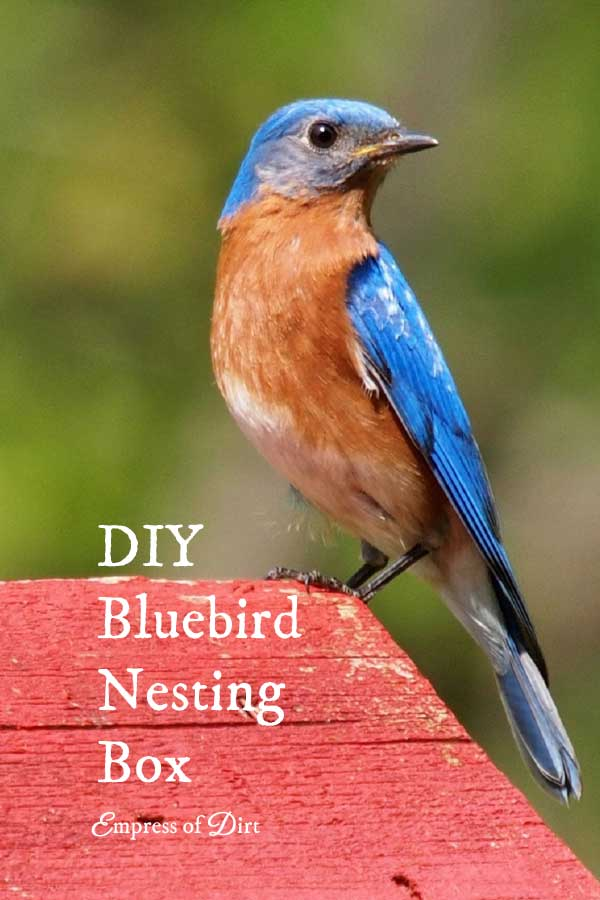 How to build a nesting box for bluebirds empress of dirt for Types of birdhouses for birds