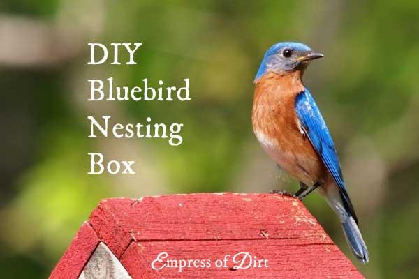 How to Build a Nesting Box for Bluebirds
