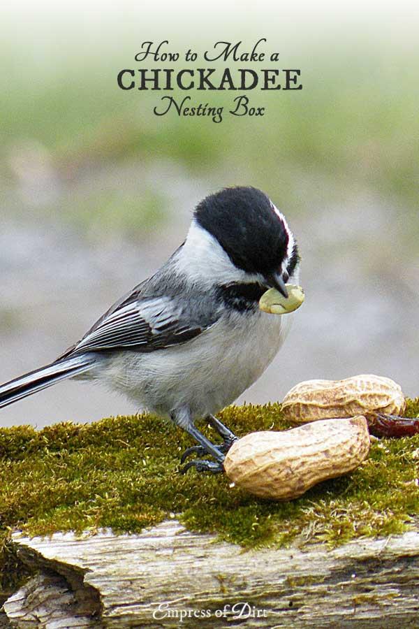 How to make a nesting box for chickadees