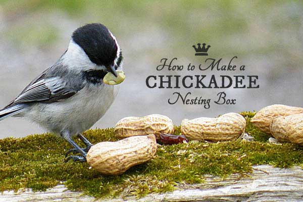 Free building plans for making a chickadee nesting box