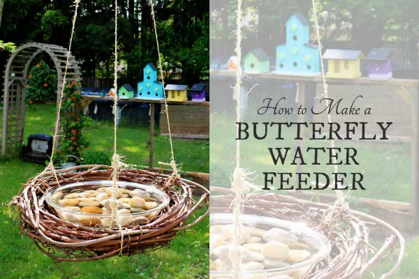 How to make a butterfly water feeder