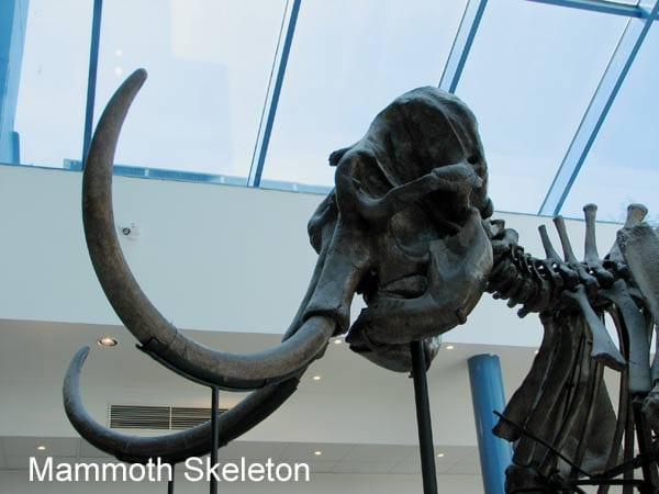 Mammoth skeleton | How cool would it be to find a dinosaur, prehistoric wolf, or mammoth bones while digging in the garden? This collection of stories shows some incredible discoveries of bones in backyards.