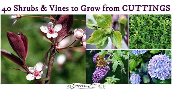 Shrubs and Vines to Grow from Cuttings
